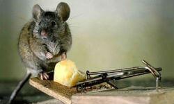 Мышь залезла на человека